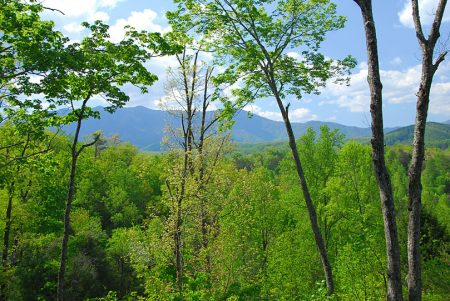 Lookout Bear: 3 Bedroom Pigeon Forge Cabin Rental