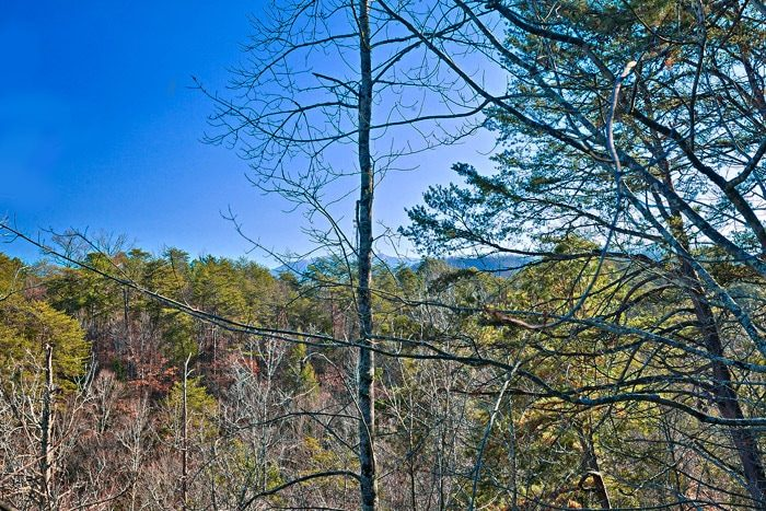 Cabin with Wooded Views - Bear-E-Nice